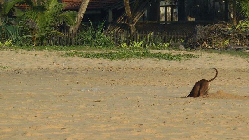 noch mehr Hunde in Sri Lanka