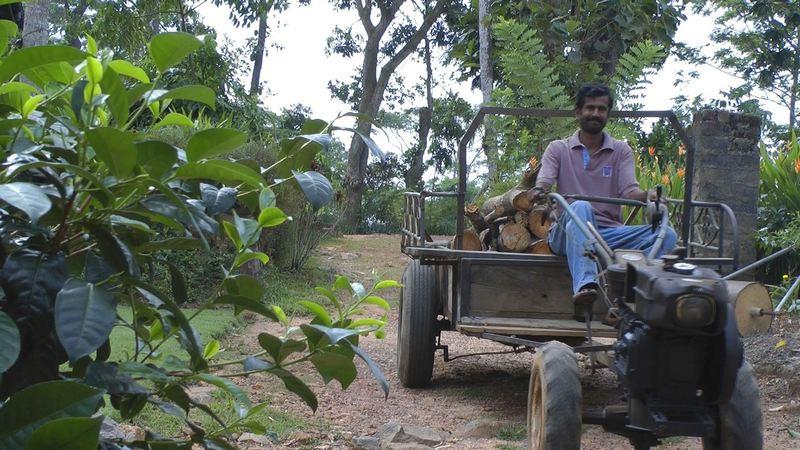 Plantagenarbeiter auf der Virgin White Tea Plantage